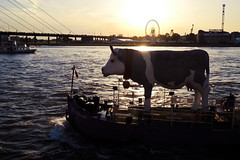 yes...cows can walk on water (Blende1.8) Tags: bridge sun silhouette backlight river kuh cow boat wasser ship fuji ships fujifilm 1855mm fluss milka dsseldorf rhine sonne rhein fujinon kirmes gegenlicht rheinkniebrcke schattenriss xe1 muhboot