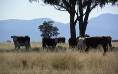 .,. 'Part Biddon', Gilgandra NSW
