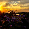 (alliance1) Tags: flowers sunset color clouds twilight fuji loonlake 2014 lincolnhills x100s