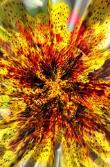 jaguares (Sebastián Howl Jinete) Tags: pink abejas naturaleza love sol cali yoga kids arbol ojo mar madera agua war rocks colombia arte nirvana amor practica flor playa viento luna muerte vision cielo pixel hate polen psicodelia fe fuego dust montaña floyd mariposas naranja aire estrella istambul silencio chaman castor ballena dios ilustracion tertulia tierra espacio magia jaguares petalo 2014 panal universo sincronia monahatoum tercer conciencia sismo elevar difital hojoa entrenamientoi sebastianjinete