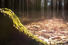 Fake Winter (patkelley3) Tags: moss winter spring green