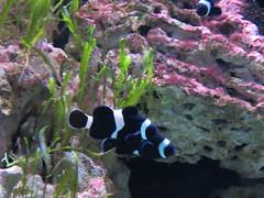 00734937 Aquarium Berlin 1 - 2017 (golli43) Tags: aquariumberlin zoo fische krokodile quallen wasser wasserpflanzen amphibien insekten unterwasserwelt