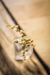 Mimosas (Monica Fiuza) Tags: mimosas acacias amarillo yellow redondo round