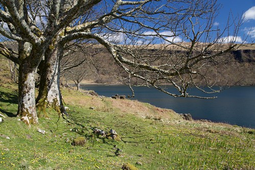 Ardtornish Point Trees