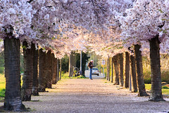 Heemskerk (Ralph Apeldoorn) Tags: bloesem blossom heemskerk nederland netherlands noordholland