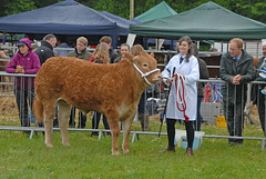 Cattle 001 - Angus Agricultural Show 2016 (john_mullin Thanks for 11 million views) Tags: scotland scottish farm farming agriculture show event annual cattle livestock judge judging class breed breeds breeding brechin angus