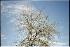 Scan008 (anantadarsan) Tags: leicaminilux fujicolorpro400h hasselbladflextightx5