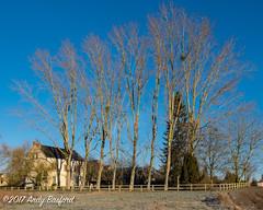Farmhouse, the Nièvre, January 2017 (serial_snapper) Tags: républiquefrançaise building landscape tree nièvredépartement bourgognefranchecomtérégion ciez bourgognefranchecomté france fr