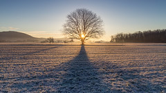 Tree sunrise (Sebo23) Tags: tree baum sonnenaufgang sonnenstrahlen sunrise sunbeams sunrays sun cold frühling frozen gefroren schatten landscape landschaft shadow morgenstimmung morninglight morgenlicht morgen morning gegenlicht canon6d canon24704l
