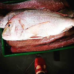 Not a bad size for red snapper #Day99 #Latelategram #RedSnapper. (c) Marlene C. Francia 2017. . . . . . . . . .  . . . . #MangroveRedSnapper #Fish #IndianOcean #Mombasa #carnivore #predator #AmbushPredator #CommercialFish #RecreationalFish #Fishmonger  #R