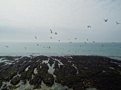 Take Off (bimbler2009) Tags: fujifilms9900w seagulls coast sea water ocean movement motion rockpool sky cloud outdoor beach