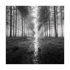 Beyond (Nick green2012) Tags: trees woodland misty landscape rain pathwaydartmoor square blackandwhite