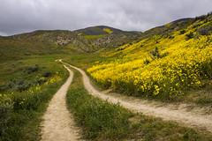 Wildflower Road (Kurt Lawson) Tags: bloom blooming ca california carrizo clouds daisy monument national plain purple range road super temblor wildflowers yellow