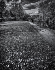 Daisies (JEFF CARR IMAGES) Tags: northwestengland canals peakforestcanal springtime
