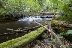 DSC05245 (nigel0577) Tags: sony alpha a99ii tasmania 1635mm ziess forest green waterfall
