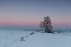 Winter evening (Mirek Pruchnicki) Tags: moon snow tree winter evening orły województwopodkarpackie polska