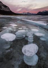 Preachers Point (shaunyoung365) Tags: mountain lake abraham canada alberta banff winter frozen bubbles