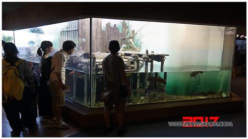 品川水族館33.jpg