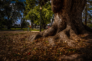 Deep Roots in Pasadena Central Park