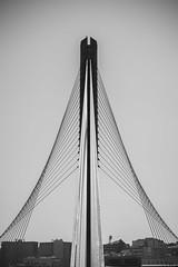 _DSC0310 (fatuartetmj) Tags: puente tirantes arquitectura urbano río pontevedra galicia bridge