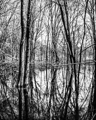 Swamp Shadows (Bailiwick Studios) Tags: panasonic20mmf17 contrast highcontrast blackandwhite blackwhite mono trees shadows whiteandblack monochrome tree forest michiganfavorites