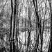 Swamp+Shadows