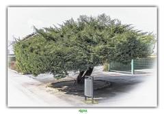 THE GARBAGE MAN / L'EBOUEUR (régisa) Tags: éboueur ripeur garbage man worker poubelle berlaimont écoledemormal analogie analogy arbre tree métier work job travail trash collector
