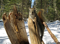 (Sarah-Vie) Tags: img6920 écureuil