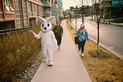 Happy Easter (cookedphotos) Tags: toronto fuji xt1 23mm streetphotography street easter bunny mascot easterbunny random girls women costume sidewalk creepy vsco libertyvillage
