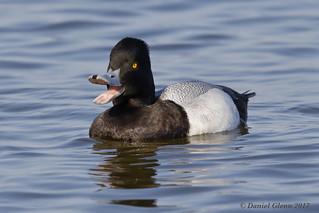 Quacking good!