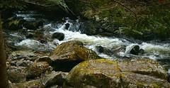 River Wolfsteiner Ohe (Caledoniafan (Astrid)) Tags: caledoniafan nature natur landscape landschaft buchbergerleite wolfsteinerohe bach fluss river stream bavaria bavarianforest bayern bayerischerwald gorge klamm nikon nikoncoolpixl820 nikoncoolpix