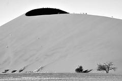 Luz e sombra!! (puri_) Tags: areia duna deserto luz sombra arvores silhuetas picmonkey