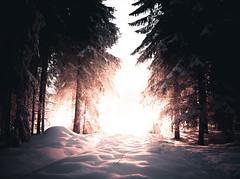 strange glow (Nippe16) Tags: winter moody dreamy frost snow scary light bright fog mist finland atmosphere wonderland