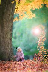 Autumn Fantasy (Upstream Photography) Tags: autumn isabel child tree fantasy birmingham leaves orange green photoshop