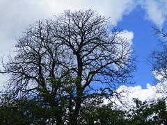 IMG_0429 (cristinamonicamoldoveanu) Tags: vegetation spring bucharest botanicalgardens tree copac