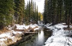 Prairie Creek Tributary (John Andersen (JPAndersen images)) Tags: beaverpond bluesky creek elbowfalls kananaskis landscape logs morning snow springs trees water
