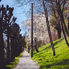 IMG_5190 (TuddMSK) Tags: nature portrait action landscape leaves spring cherry blossom tree outdoors canon eos 600d digital photography art colors