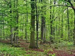 Frühlingswald (Blende2,8) Tags: reutlingen laub grün bäume wald