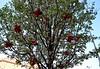 Il dono (Colombaie) Tags: pasqua albero fiori fioritura foglie pigneto fiocchi vecchie decorazioni natale festa resurrezione cristo gesù umanità sognare vivere amare amore coraggio sconforto noi roma bellezza