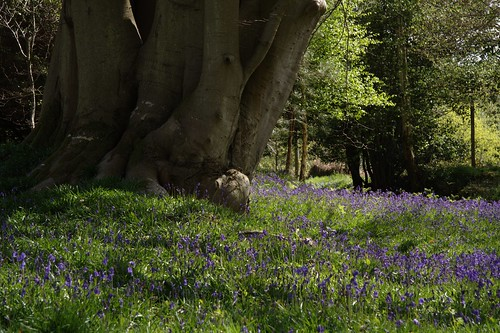 Wakehurst Place in Spring