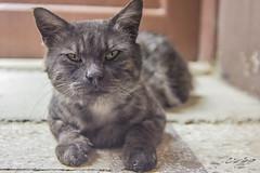 الكسلان (Tarek Ezzat) Tags: قطة قط حيوان شارع سلالم عمارة cat animal m42 lens canon 600d