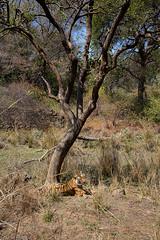 TIG171352GBw (giles.breton) Tags: andyrouse ranthambhorenationalpark india dickysingh