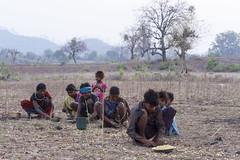 Collecting Mahua fruit (wietsej) Tags: collecting mahua fruit maikal hills chhattisgarh india sony people morning a900 sal70200g 70200