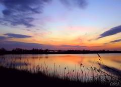 ___ dolci atmosfere! ___ (erman_53fotoclik) Tags: dmc tz25 panasonik dolci atmosfere cielo terra acqua elementi nuvole aloni velature riflesso profili canne vegetazione sera crepuscolo imbrunire vespro erman53fotoclik panorama orizzonte sfumature tramonto deltadelpo