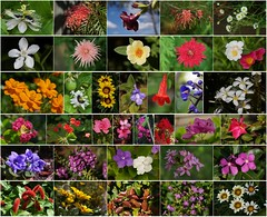 ONE DAY flowers in MY GARDEN (Spring in Autumn) (Tatters ❀) Tags: mosaic collage flowers dipstych home brisbane queensland colorful colourful