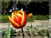 """Be happy for this moment. This moment is your life. "" ✻Happy Thursday-Flower ✻✻ (AvóQuéu) Tags: photosandcalendar macroelsalvador excellentsflowers exquisiteflowers mimamorflores flickrflorescloseupmacros greatshotss faunayfloradelmundo natureandpeopleinnature mixofflowers flickrsportal esenciadelanaturaleza frommetoyouwithlove magicmomentsinyourlife onlythebestofflickr"