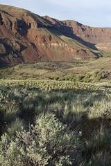 John Day River, Oregon (Steve Roelof) Tags: usa oregon centraloregon river desert canyon rapids rafting cottonwood wilderness blm wildandscenic johndayriver publicland clarno
