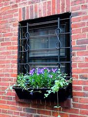 (elalex2009) Tags: window boston bostonma beaconhill dwwg
