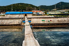 Village of Salt (TigerPal) Tags: blue work countryside nikon salt korea korean farmer evaporation saltpan anmyeondo panner d700 anmyeonisland