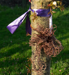 In Memory of Maren Ribbons on a tree (Singing With Light) Tags: green photography 1 evening spring downtown purple pentax may milford k3 maron 2014 singingwithlight singingwithlightphotography honormaron